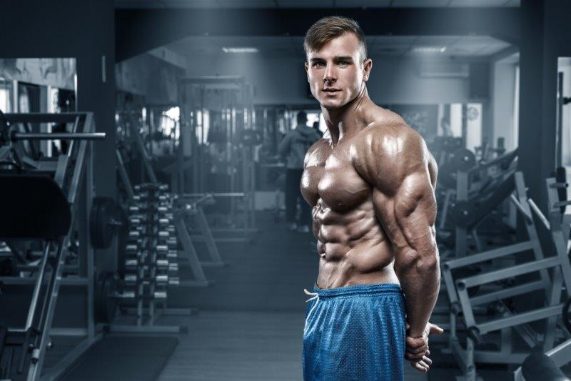 Working process of the muscle building